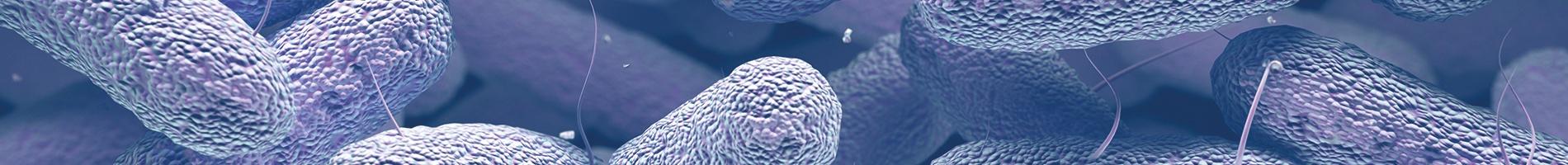 Enterobacteriaceae.jpg