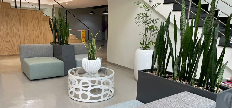 using indoor plants to create social distancing in the office