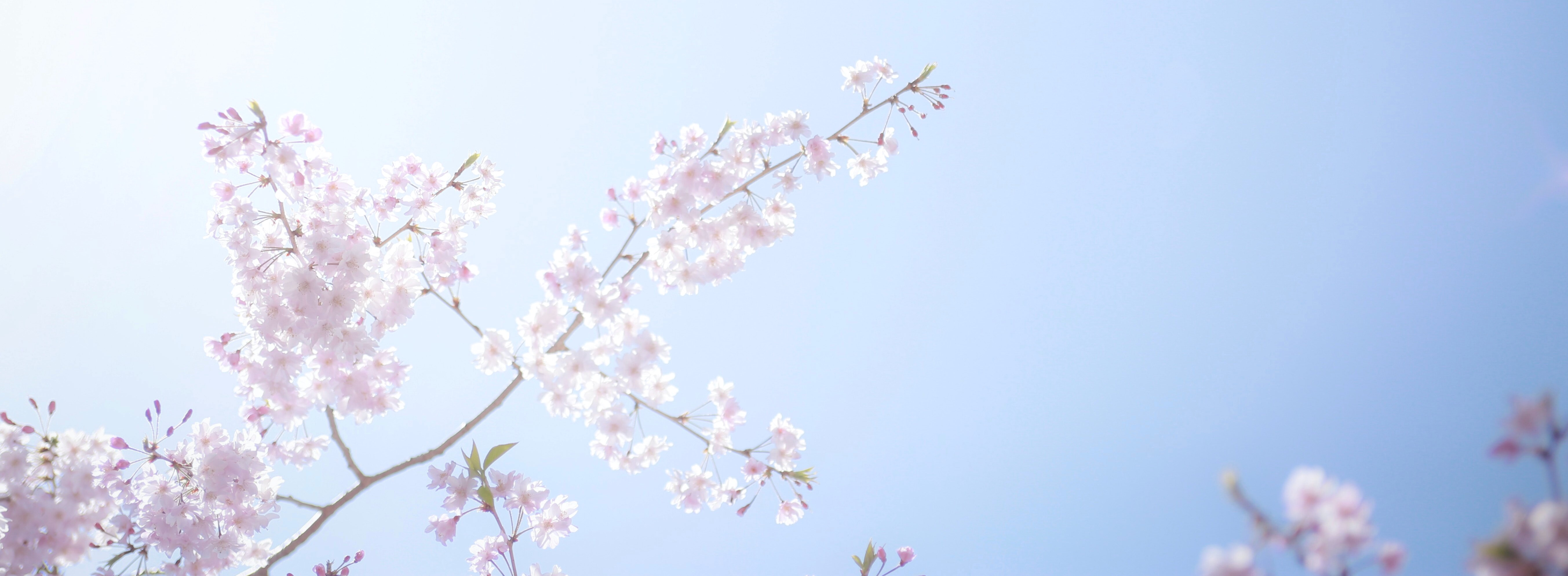 Spring time allergies and how to avoid them this Spring